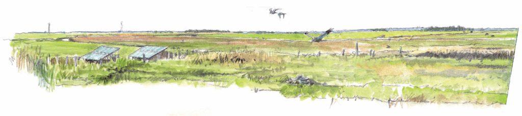 Le Marais en automne. Quoi voir et quand ? Réserve naturelle régionale du Marais de la Vacherie