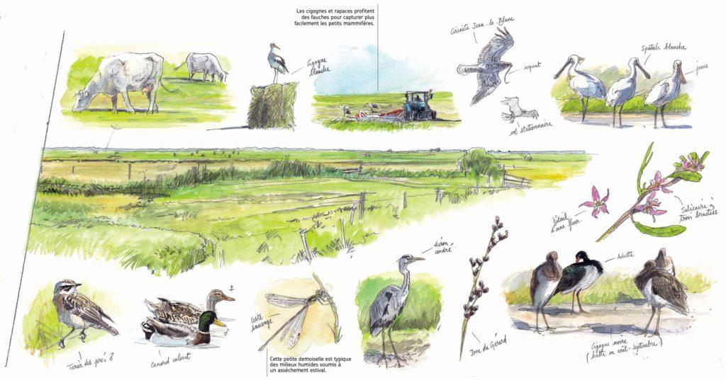 Le Marais en été. Quoi voir et quand ? Réserve naturelle régionale du Marais de la Vacherie