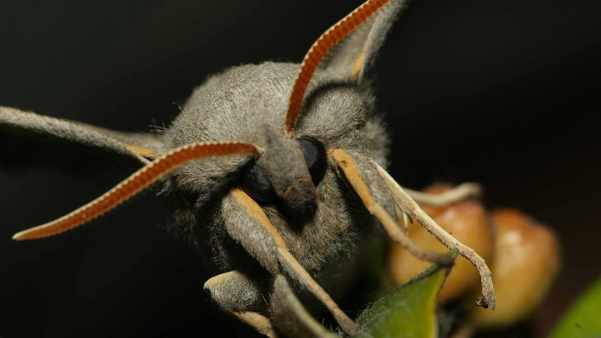 Papillon de nuit - Hétérocère - Réserve du Marais de la Vacherie