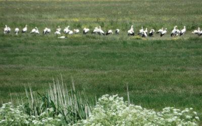 Comptage ornithologique à la Vacherie – 20/05/2020