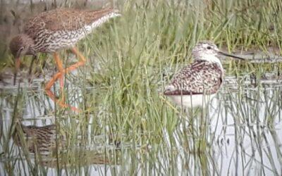 Comptage ornithologique à la Vacherie – 29/06/2020