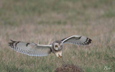 Comptage ornithologique à la Vacherie – 28/09/2020