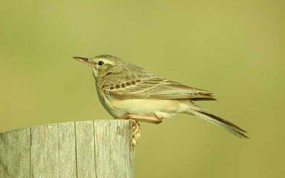Comptage ornithologique à la Vacherie – 03/09/2020