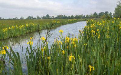 """Exposition photos """"Balade dans le marais"""" à la réserve"""