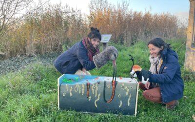 Comptage ornithologique à la Vacherie – 13 et 23/11/2020