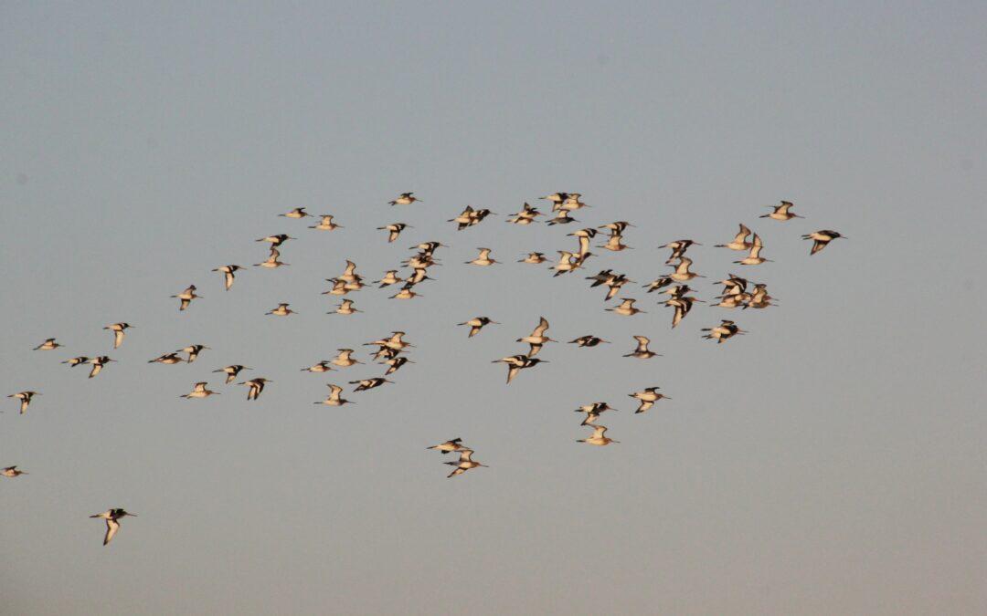 Comptage ornithologique à la Vacherie – 25/01/2021