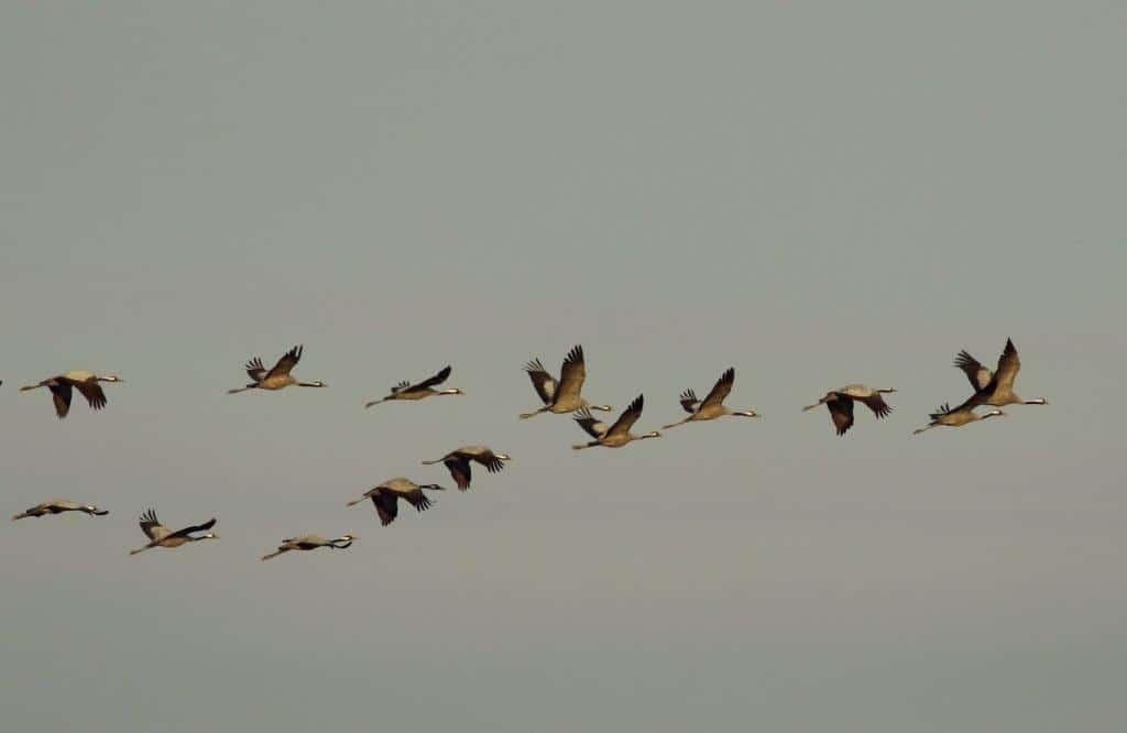 Comptage ornithologique à la Vacherie – 12/01/2021